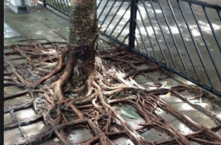 real square roots